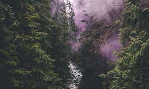 紫色烟雾中的山间溪流摄影高清图片