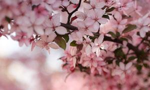 春天花团锦簇近景特写摄影高清图片