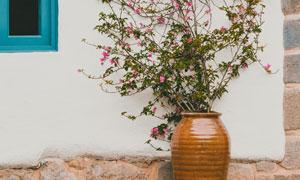 从坛子里长出来的鲜花藤蔓高清图片