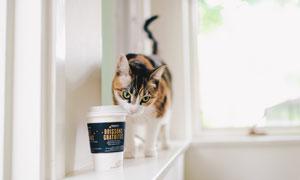 躲在咖啡杯后的小花猫摄影高清图片