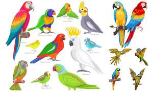 色彩艳丽的鹦鹉们主题设计矢量素材
