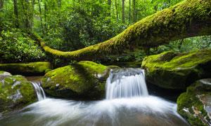 人迹罕至森林瀑布景观摄影高清图片