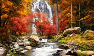 山间红叶林与瀑布景观摄影高清图片