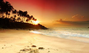 海景與夕陽西下的椰樹剪影高清圖片