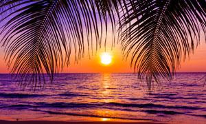 树叶映衬下的黄昏海景摄影高清图片