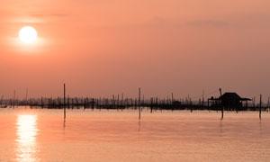 黄昏在海边林立的木桩摄影高清图片
