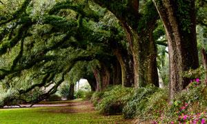 公园里爬满藤蔓的大树摄影高清图片