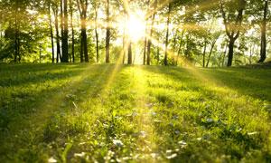耀眼阳光下的树木草地摄影高清图片