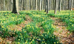 树林中的黄色小花植物摄影高清图片