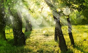 大树草地逆光梦幻效果摄影高清图片
