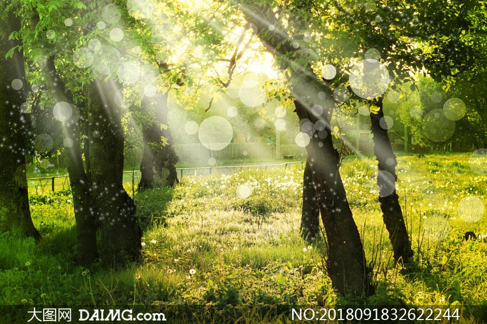 大树草地逆光梦幻效果摄影高清图片 - 大图网设计素材