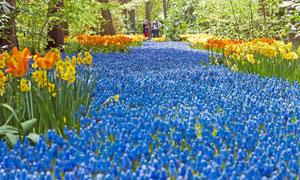 公园里盛开的花卉植物摄影高清图片