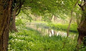 河边的大树与花草植物摄影高清图片