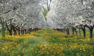 春天开花的树木与植物摄影高清图片