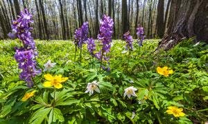 树林中的花卉植物特写摄影高清图片