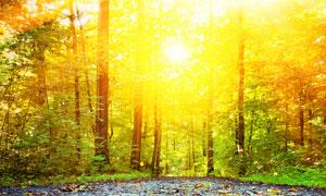 鲜有人涉足的树林全景摄影高清图片