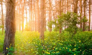 树林黄色小花植物逆光摄影高清图片
