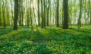 树林里一派生机勃勃的景象高清图片