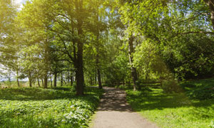 小路旁的大树草地风光摄影高清图片