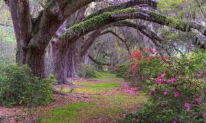 藤蔓大树下开满花的植物高清图片