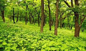 树林里绿油油的植物等摄影高清图片