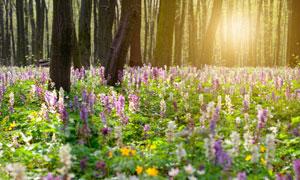 树林里盛开的花卉植物摄影高清图片