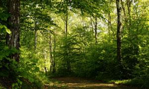 野外茂密绿叶树林风景摄影高清图片