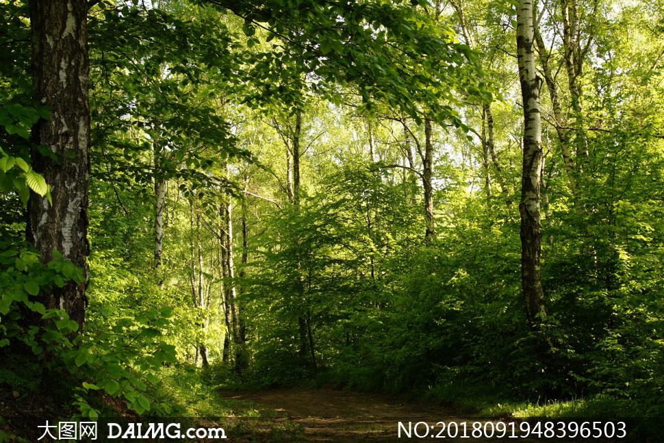 > 素材信息                          小路边的大树自然风景摄影高清
