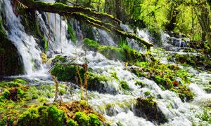 瀑布与长满青苔的树枝摄影高清图片