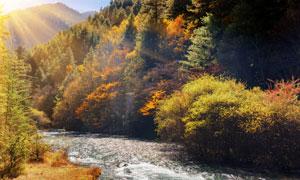 山中的河流与茂密植被摄影高清图片
