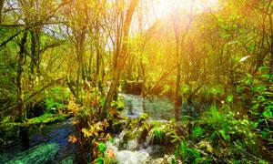 丛林中的河水风景逆光摄影高清图片