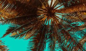 仰视角度椰树近景特写摄影高清图片