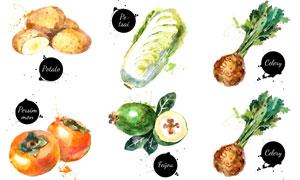 水彩效果芹菜与白菜等蔬菜矢量素材