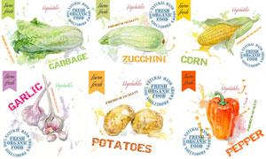 玉米與土豆等水彩蔬菜創意矢量素材