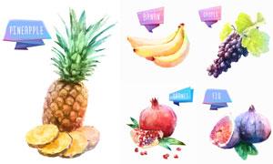 菠萝与香蕉等水果创意设计矢量素材