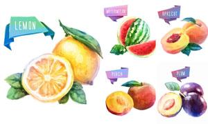 切開的檸檬等水彩果實創意矢量素材