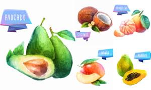 椰子桔子與牛油果芒果設計矢量素材