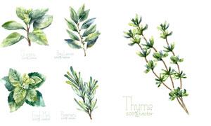 多款水彩风创意植物设计矢量素材V01