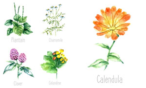 多款水彩风创意植物设计矢量素材V02