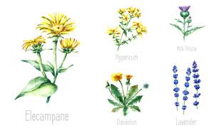 多款水彩风创意植物设计矢量素材V03