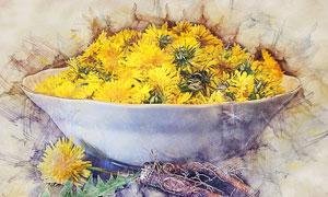 碗里的新鲜黄菊花水彩绘画高清图片