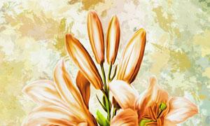 逼真效果百合花朵绘画创意高清图片