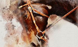 一匹棕色毛发马匹绘画创意高清图片
