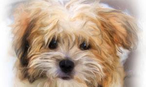 萌态可掬的小狗狗绘画创意高清图片