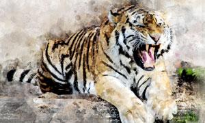 石头上的一只猛虎绘画设计高清图片