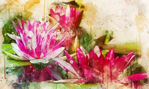 绽放着的鲜艳花卉植物绘画高清图片