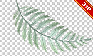 多款多肉植物与绿叶等主题免抠素材