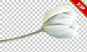 郁金香等多种花朵元素免抠图片素材