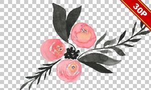 手绘效果水彩玫瑰主题免抠图片素材
