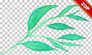 夏日花朵绿叶水彩创意免抠素材集V04